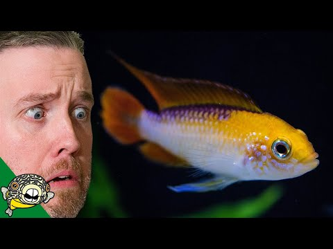 Xxx Mp4 HOW DID I SPEND SO MUCH TROPICAL FISH UNBOXING 3gp Sex