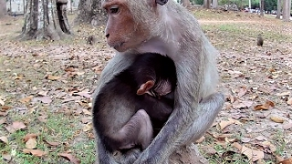 Adorable little baby monkey eat milk mom