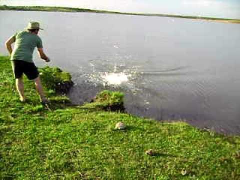 Pescando Trairão no Uruguai