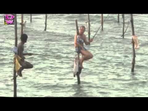 pesca en palo