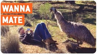 Emu Tries to Mate with Man | WTF