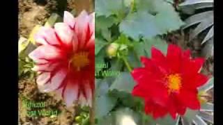 Shono shono go sobe shono dia mon-Kishore Kumar
