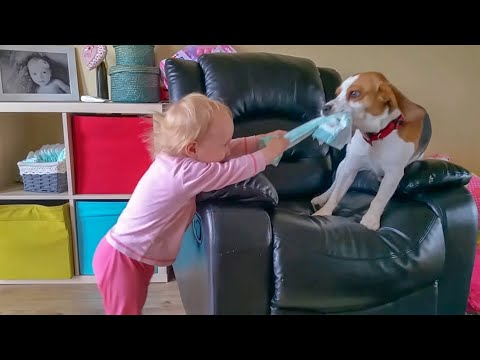 This Beagle is the Best Playmate Dog For Little Girl