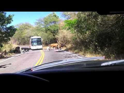 Las Calles de Honduras VIVIENDO LA VIDA