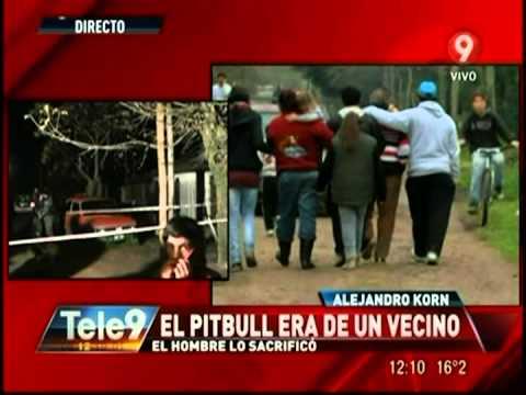 Un pitbull mató a nene de dos años Participaba en peleas de perros