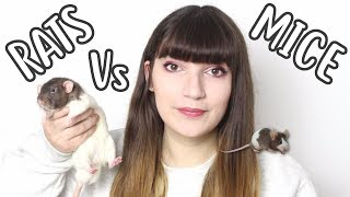 🐀 RATS Vs MICE 🐁| Which one should you get?