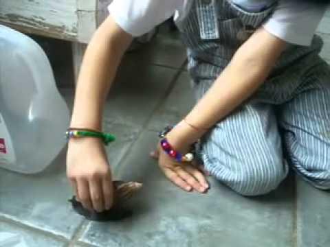 Vamanadev found a Snail
