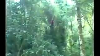 Cenas fortes homem cai de árvore e morre