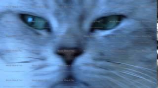 British chinchilla cat extreme close up