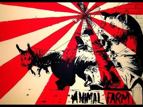 İnsan Harici Hayvanlarda Siyaset ve Seçimler