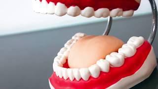الطريقة المثالية للحفاظ على أسنانك  _  د . أحمد الشناوي
