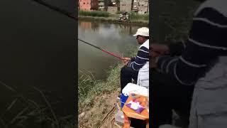 صيد سمك بلطي مزرعة توتو المعدية