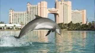 Dolphins - Endangered Species Project