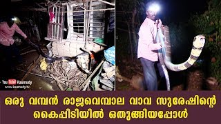 A huge King Cobra surrenders to Vava Suresh | Kaumudy TV