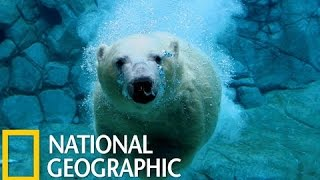 Wild Russia - Siberia (National Geographic) Animal Planet (AP)