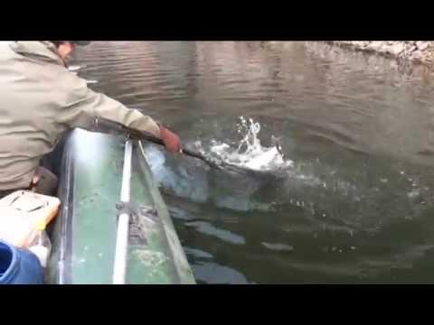 3 рыбака поймали 29 щук