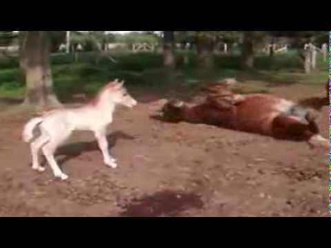 Funny Horse Compilation