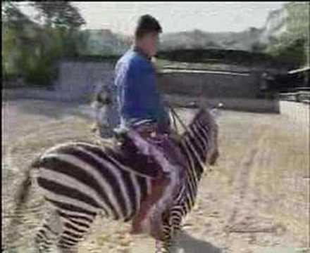 Gianpiero e la zebra safari