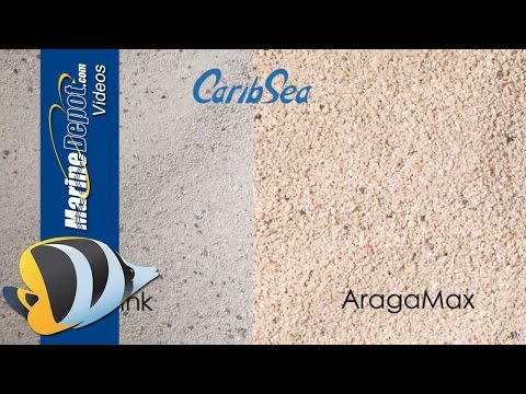 Xxx Mp4 Aquarium Sand Deep Sand Bed Or Shallow Coarse Or Fine Find Out 3gp Sex