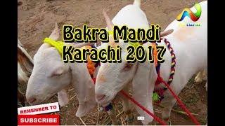Lalokhet Bakra  Mandi 2017 || Goat for sale in Karachi ||  Eid ul Adha 2017