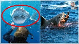 هجوم سمك قرش على إمراة وتم إنقاذها في أخر لحظة