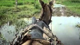 rodrigo puxando carroça