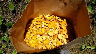 It's Time For Some Chanterelles!