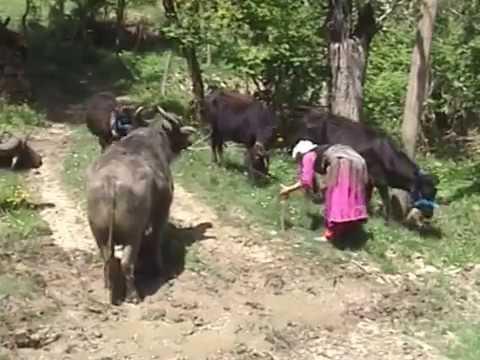 Özlem Oldu Kömüşler . Kst Azdavay Valay Sadık Oturakın Hatırası & Şabanlı Köy Yollarımız