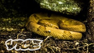 Snake Island (Part 2/2)