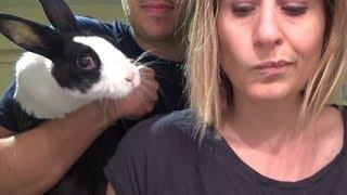 Rabbit eating on fridge cam!