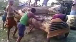 কাঠুরিয়ার জারি শারি গান