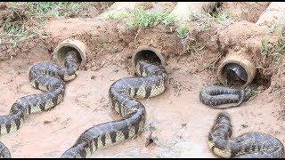 Creative Bamboo Deep Hole Snake Trap - Amazing Boys Catch Snake With The Bamboo Hole Snake Trap