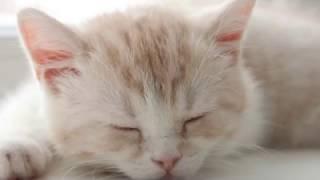 Ой, на кота воркота | Ukrainian lullaby | Колисанка