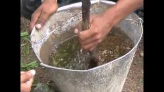 Preparation of insecticide solution from Neem, Tobacco Hindi Access Madhyapradesh