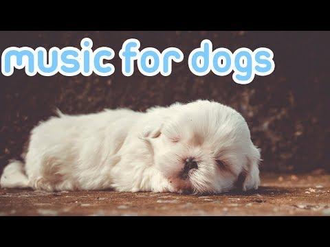 Xxx Mp4 15 HOURS Of Deep Sleep Relaxing Dog Music NEW Helped 10 Million Dogs 3gp Sex