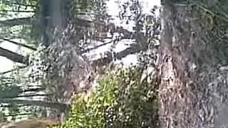 নোয়াখালী ভাষায় গালাগালি