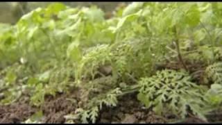 Jardinage naturel : les engrais pour enrichir le sol et nourrir les plantes