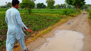 Natural Punjab Village After Rain | Rural Life In Pakistan