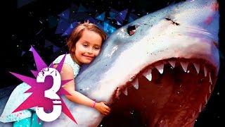 ★ Les 3 Histoires de SURVIE à des ATTAQUES de REQUIN les plus Inspirantes ! Requins Attaque Homme!