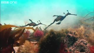 Life On Earth ~ Dhruva Aliman ~ Kaddish (Instrumental Mix)