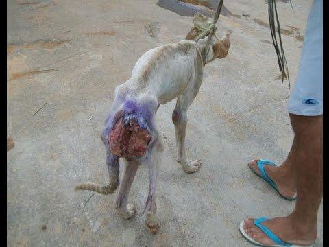 Un hombre salva la vida a un perro de la raza pit bull