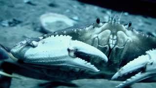 Afrique : à la vie, à la mort | Extrait : La pieuvre, caméléon des fonds marins