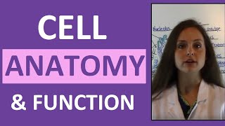 Anatomy & Physiology Cell Structure and Function Overview for Students