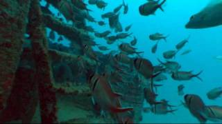 Porto de Galinhas - Mergulho nos naufrágios