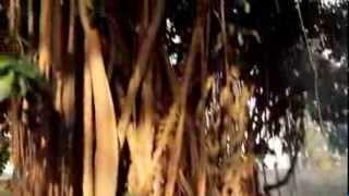 Biringan: An Misteryoso nga Lugar ha Samar