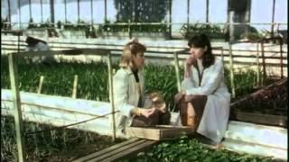 CASATORIE CU REPETITIE-1985-HQ