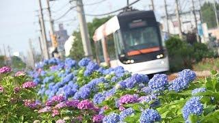 PORTRAM Harmony - Toyama Light Rail Tram Japan
