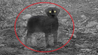 10 Of The Most Mysterious Photos That Should Not Exist