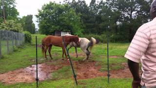 Horses meet for the first time.
