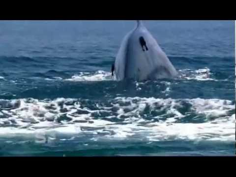 Xxx Mp4 Worlds Largest Blue Whale Colony Discovered In Sri Lanka 3gp Sex